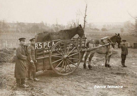 les hospitaux pour chevaux