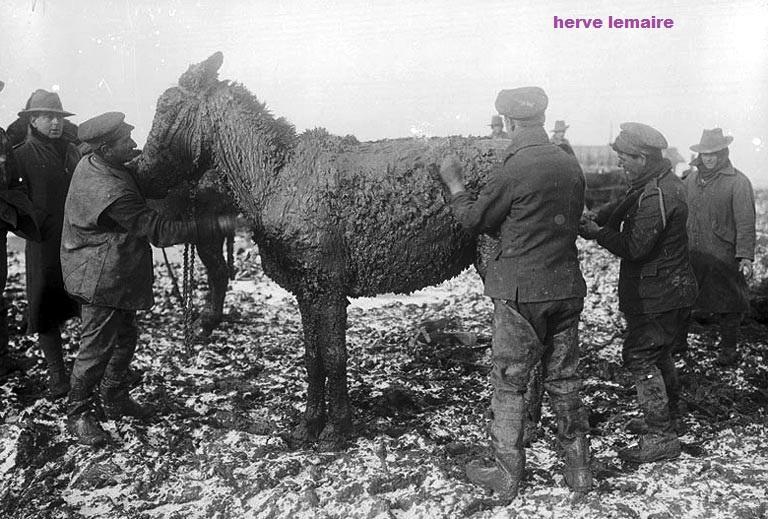 chevaux et mules
